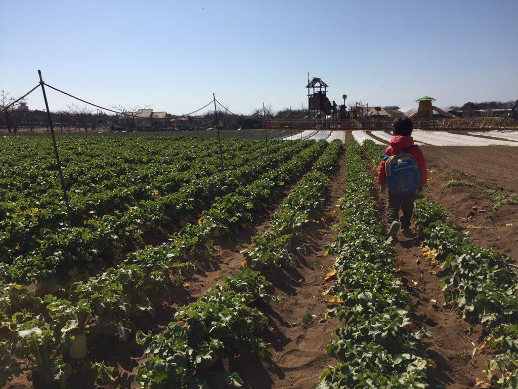 ソレイユの丘で大根の収穫体験