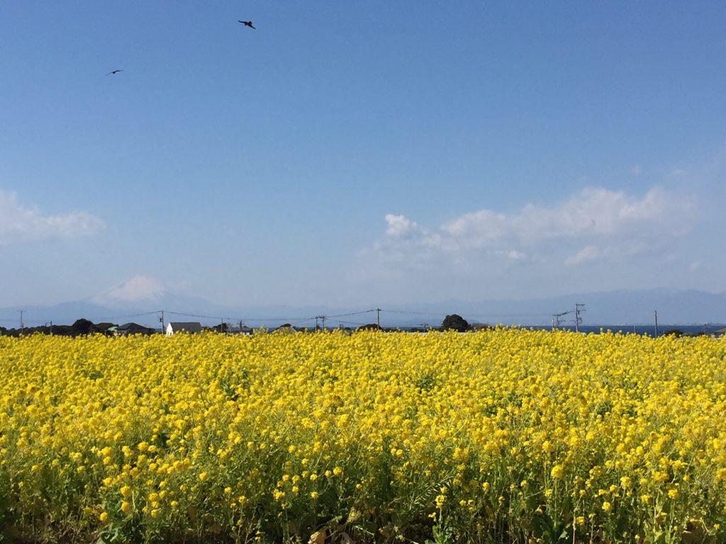 ソレイユの丘から見える富士山